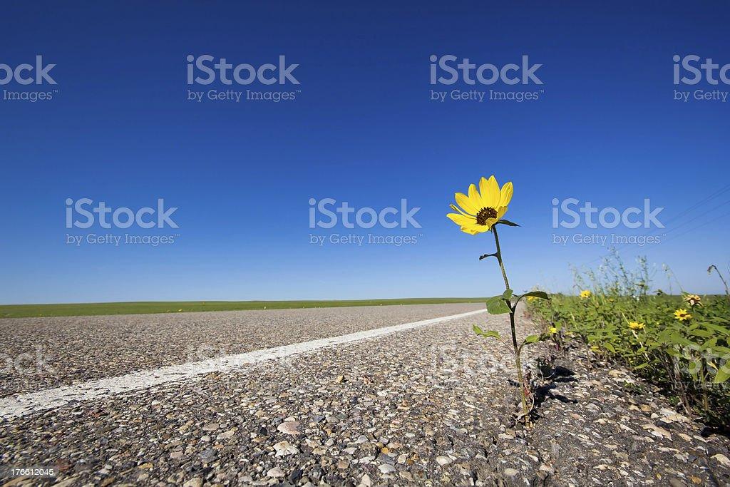 Blume auf Road – Foto