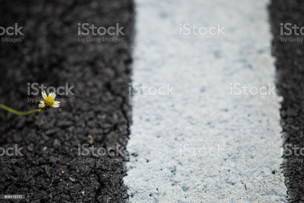 Little flower, incomplete condition. it grows and fight the roadside...