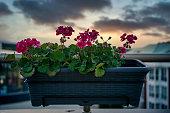 flower on the balcony