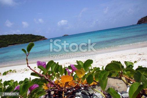flowers on an USVI beach