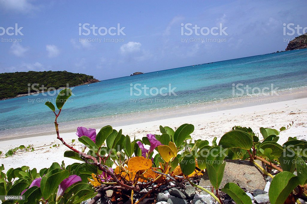 Flower on the beach stock photo