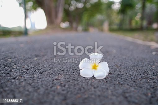 white flower on the floor