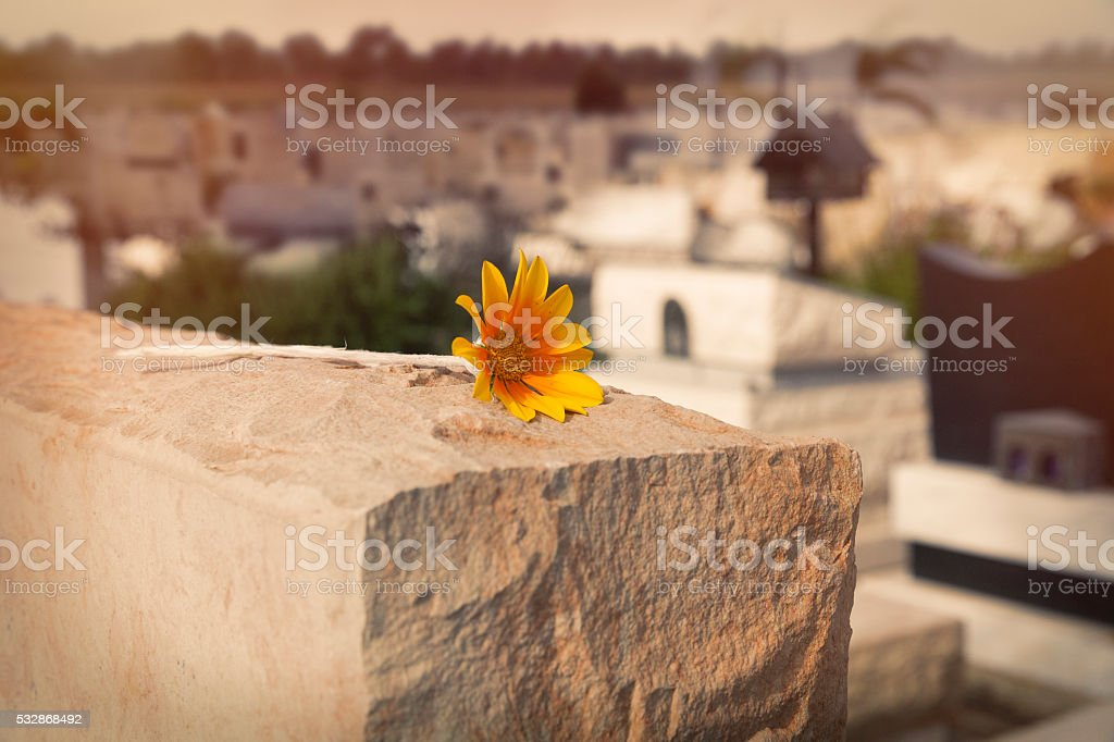 flower on tombstone stock photo