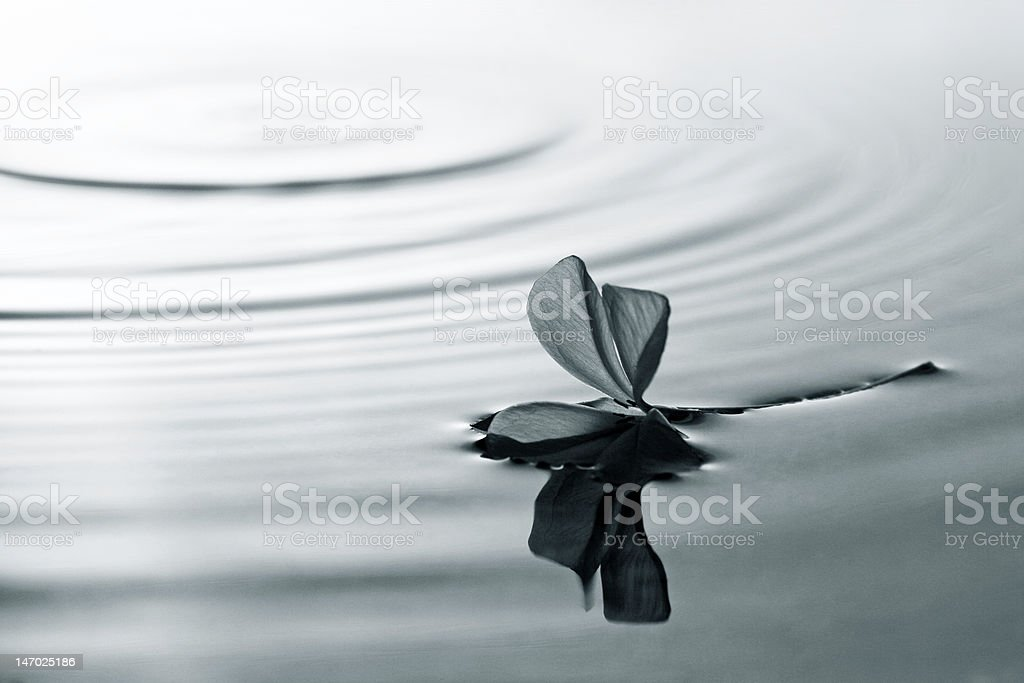 Flower on water royalty-free stock photo