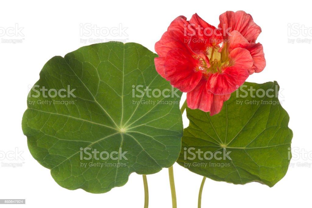flower on white stock photo