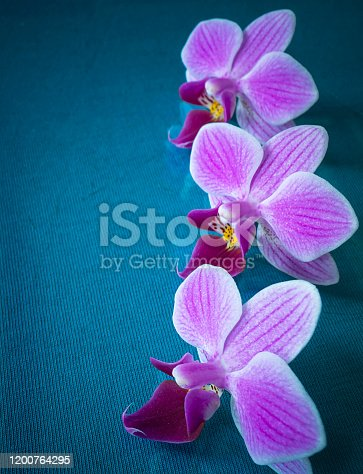 The Flower orchid at spring length of time on turn blue the background. Three flowers to rest upon table with reflection