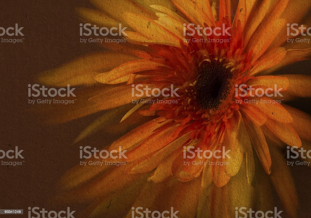 flower paper textures. royalty-free stock photo