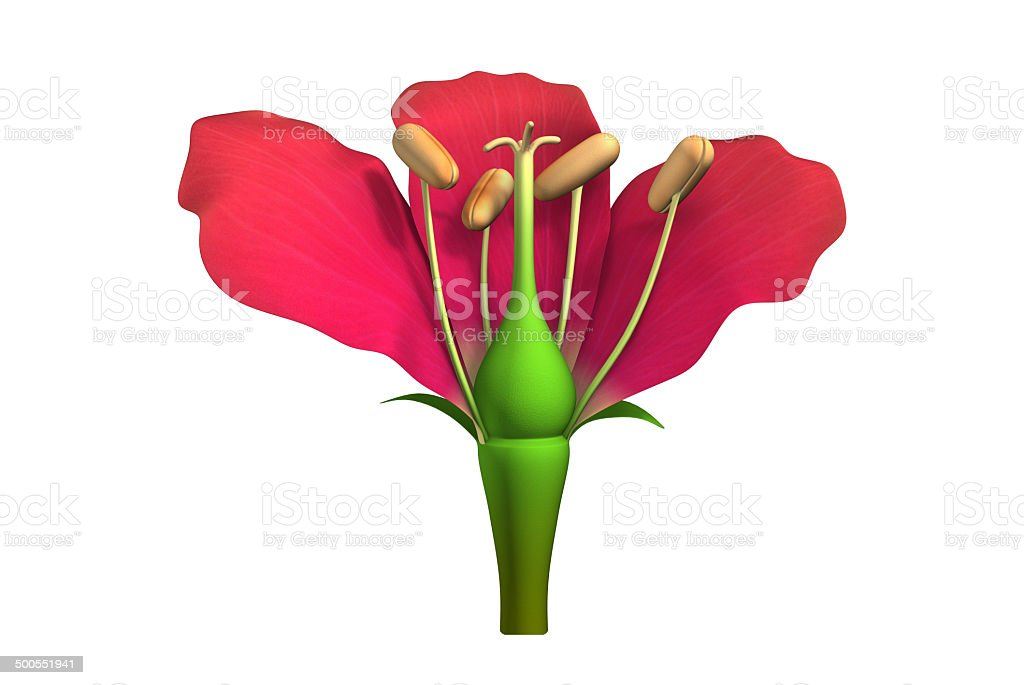 Flower Parts Stock Photo & More Pictures of Anatomy | iStock