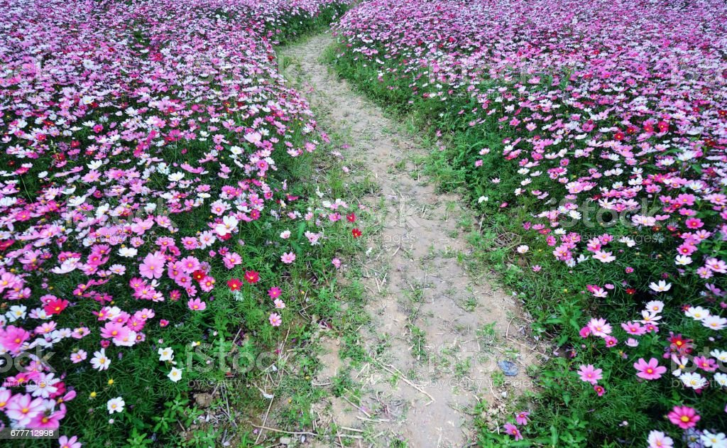 Flower path stock photo