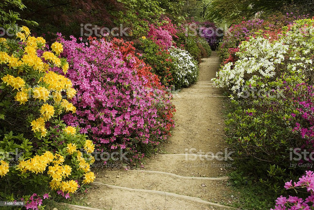 flower path to somewhere royalty-free stock photo