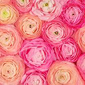 istock Flower pattern. Pink Ranunculus flowers textured background. Summer floral  Wallpaper 1167194996