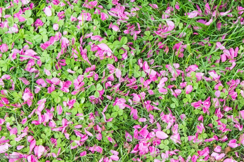 Flower Petal Background stock photo