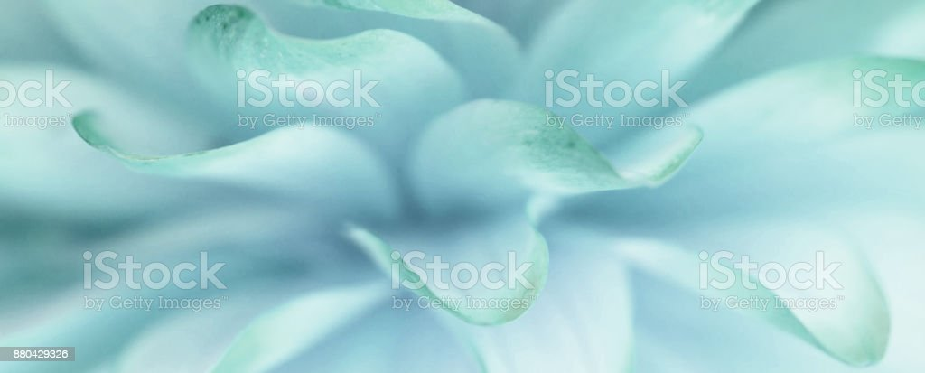A flower petal background stock photo