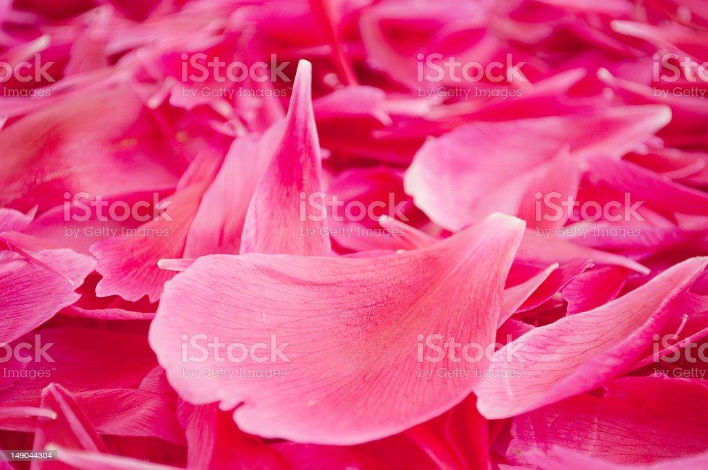 Flower petals royalty-free stock photo