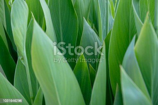 istock Flower 1031646296