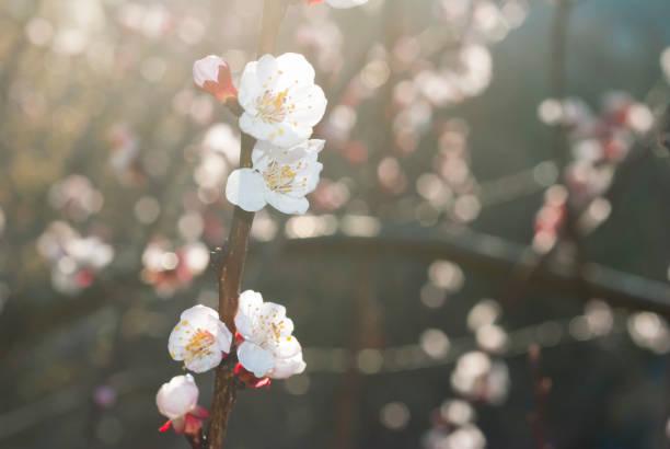 Blume – Foto