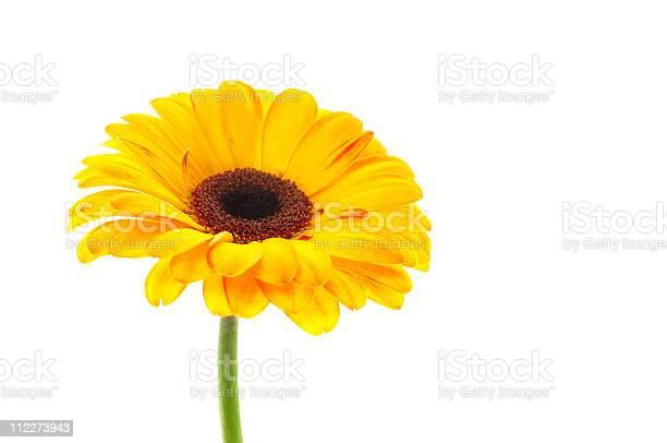 Flower picture id112273943?b=1&k=6&m=112273943&s=612x612&h=dygxnsj2hc9pgk8dcg3b6oci4jws9bb5erwr7phvy2s=