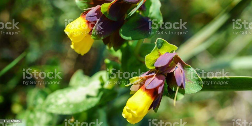 Blume #71 – Foto