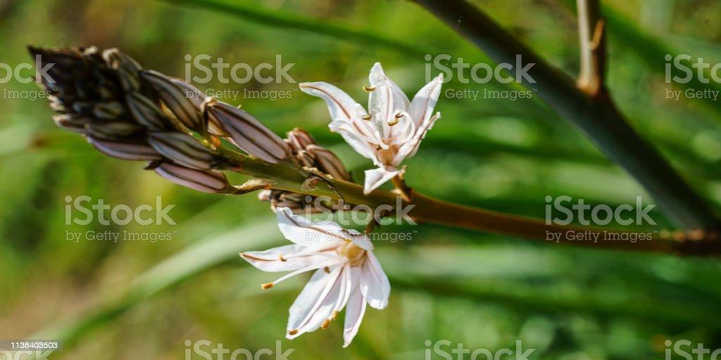 Blume #72 – Foto