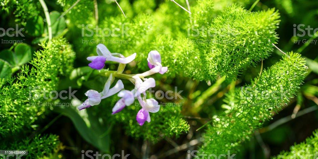 Blume #73 – Foto