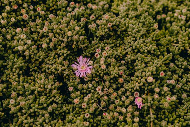 Flor - foto de stock