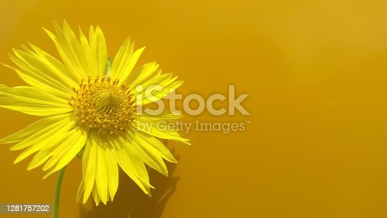 Flower with yellow background
