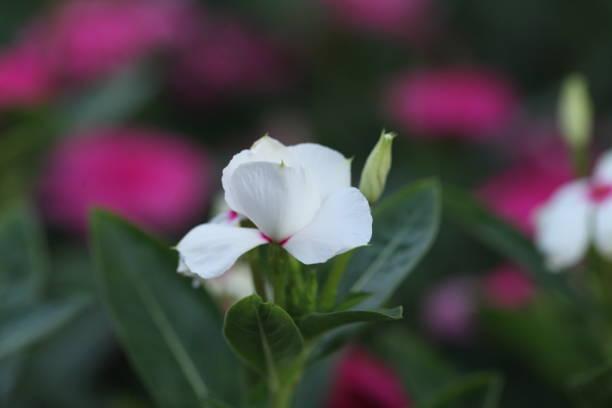 Flower picture id1302813302?b=1&k=6&m=1302813302&s=612x612&w=0&h=tlhtshwqfwitkguayhjbswxyqaynsnd8i1ge t4wksk=