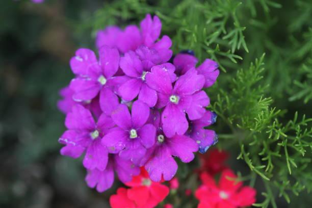 Flower picture id1302813421?b=1&k=6&m=1302813421&s=612x612&w=0&h=ddnsp9pgkcf965obiiwqywpnevz zx8 qcofbxjxgca=