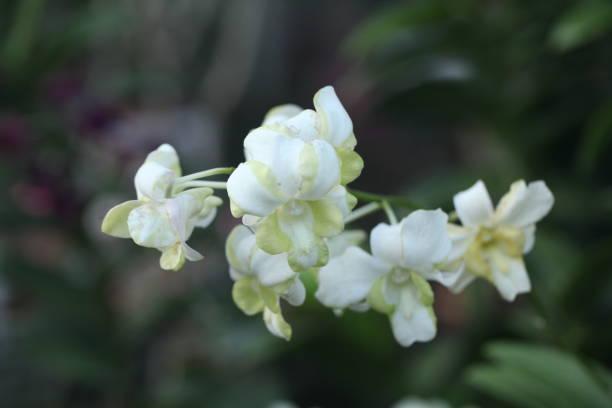 Flower picture id1302813461?b=1&k=6&m=1302813461&s=612x612&w=0&h=w5qnbiz0o0isrhuli6sidnej283xwednxvmlqfkn77o=