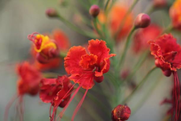 Flower picture id1302813520?b=1&k=6&m=1302813520&s=612x612&w=0&h=1ye wdyao6b2t8ptc xafus dvr970m3yyafbktgiiw=