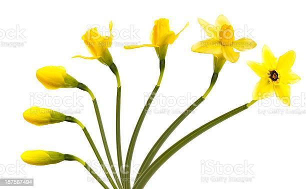 Flower picture id157567494?b=1&k=6&m=157567494&s=612x612&h=bx0dhnhxeysl9zove97wm27wqlifpjtlai9pdce5cpc=