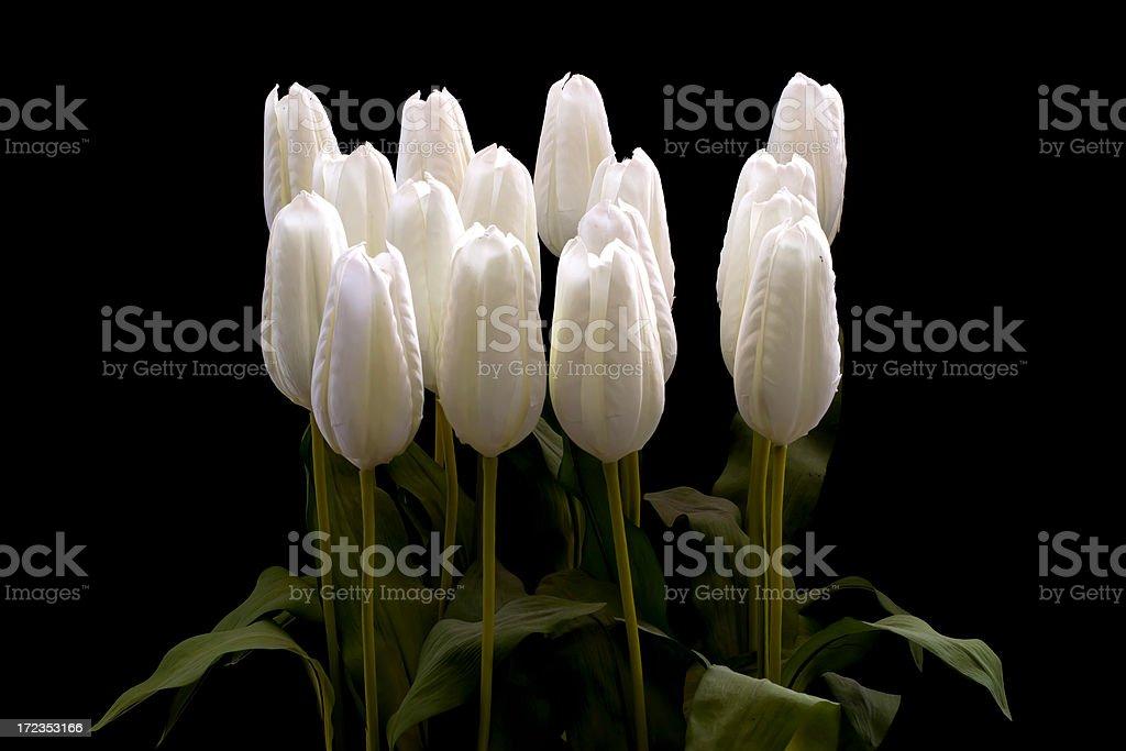 Flor foto de stock libre de derechos