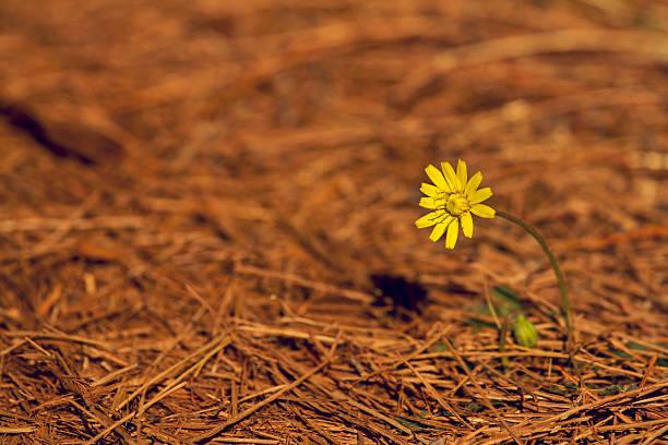 flower - byakkaya stok fotoğraflar ve resimler