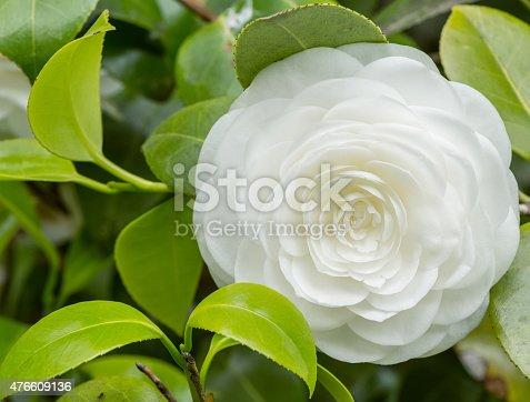 istock Flower. 476609136