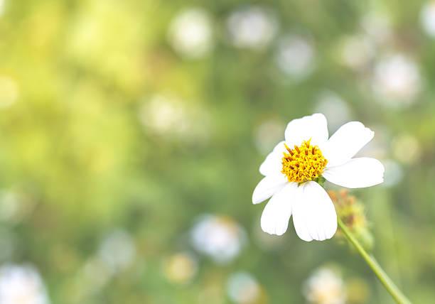 Blume. – Foto