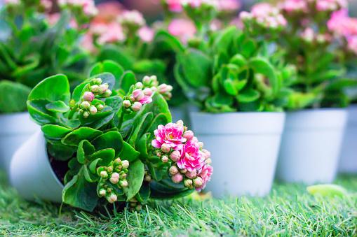 istock Flower 494605856