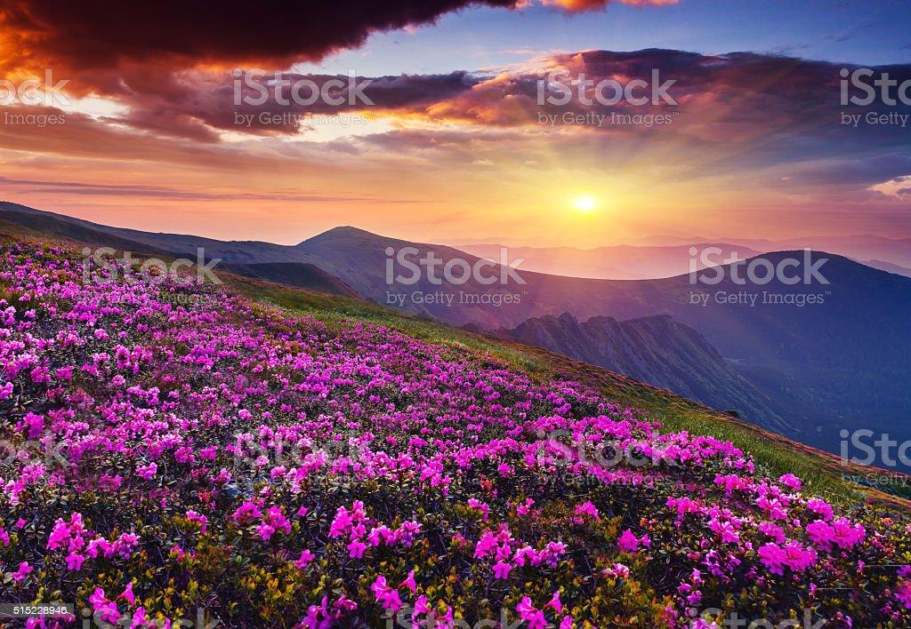 flower – zdjęcie