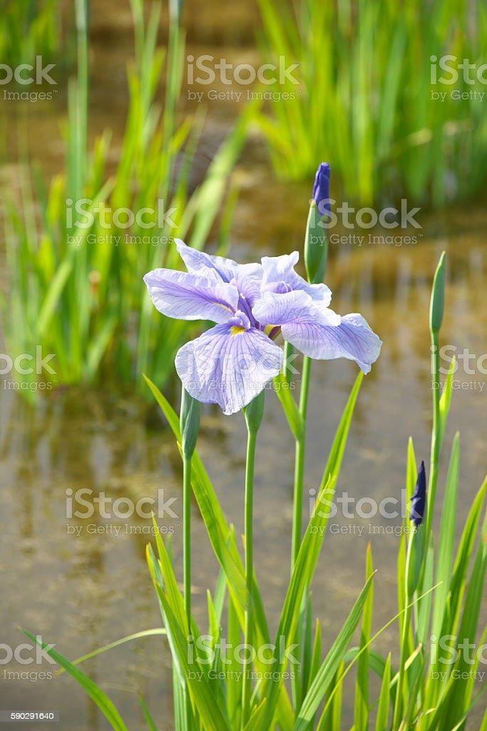Flower royaltyfri bildbanksbilder