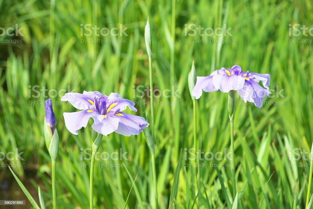 Цветок  Стоковые фото Стоковая фотография