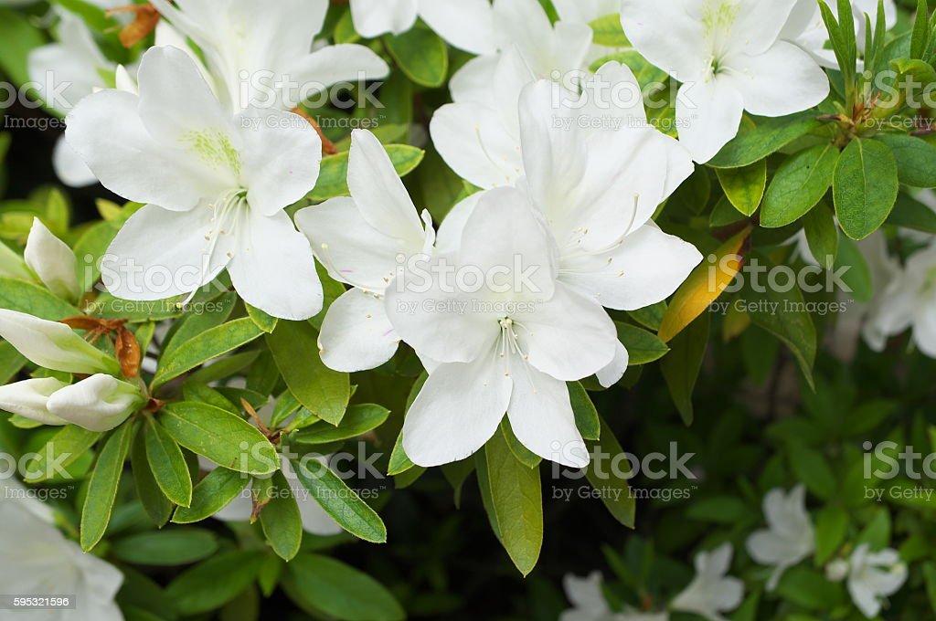 Flower bildbanksfoto
