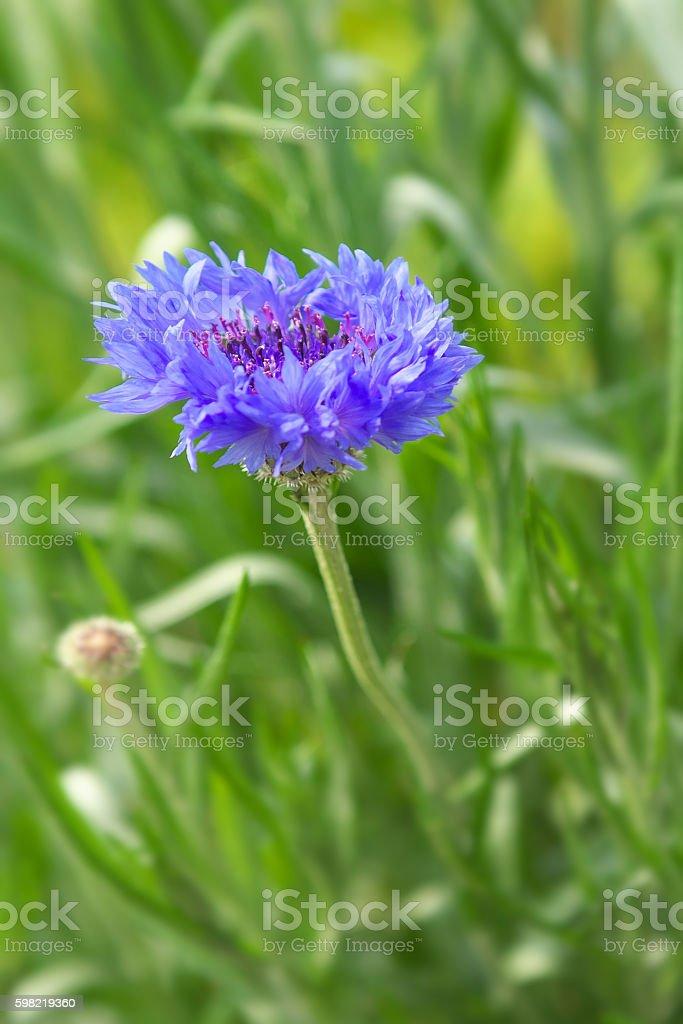 Flor  foto royalty-free
