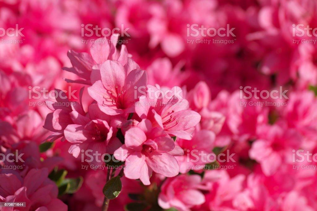 Blomma bildbanksfoto