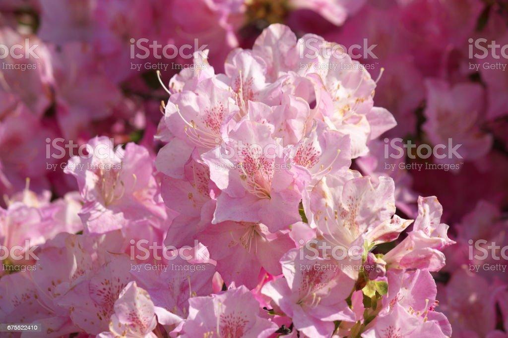 Çiçek royalty-free stock photo