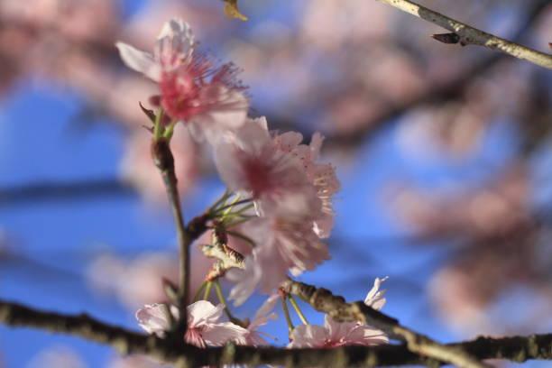 flower - liliana stock-fotos und bilder