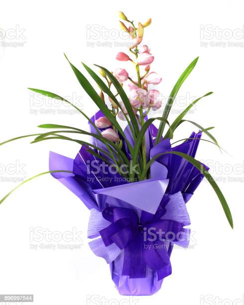Flower Stock Photo - Download Image Now