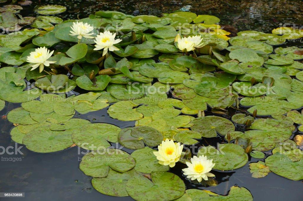 Flower - Zbiór zdjęć royalty-free (Bez ludzi)