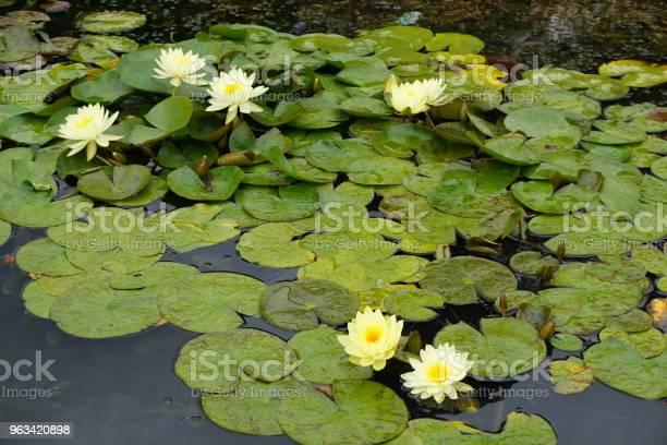 Kwiat - zdjęcia stockowe i więcej obrazów Bez ludzi