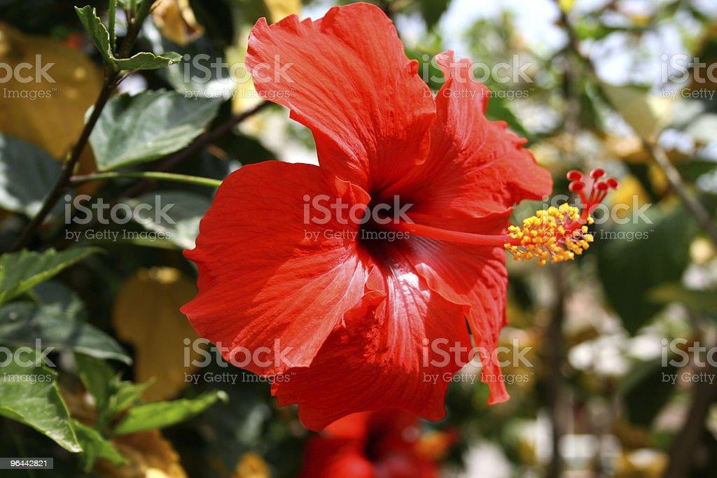 Flor - Foto de stock de Amarelo royalty-free