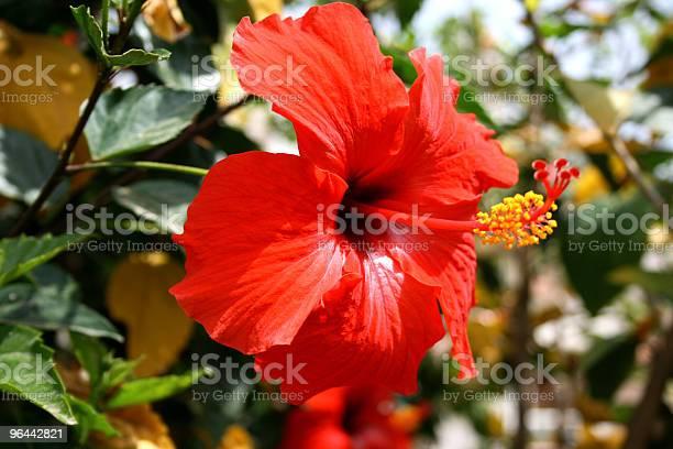 Foto de Flor e mais fotos de stock de Amarelo