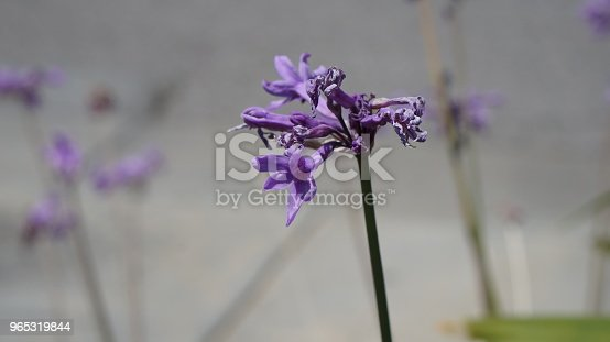 Flower Stock Photo & More Pictures of Beauty